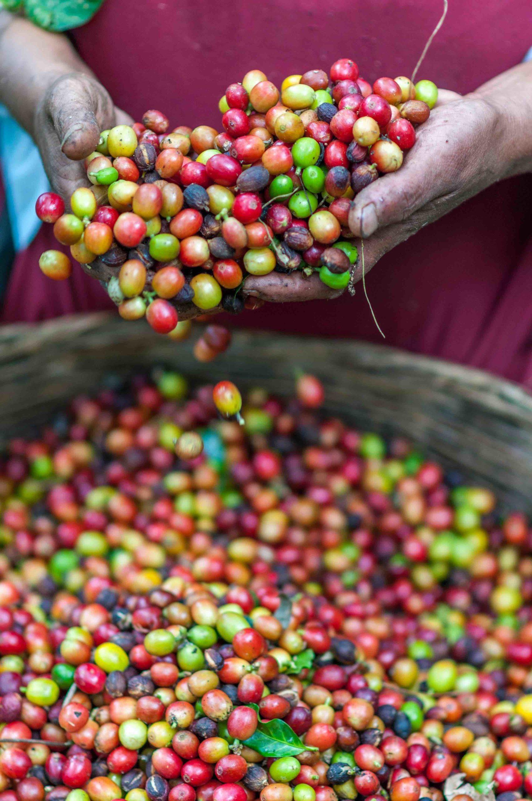 Roasting, Waco, Coffee, Beans, Texas